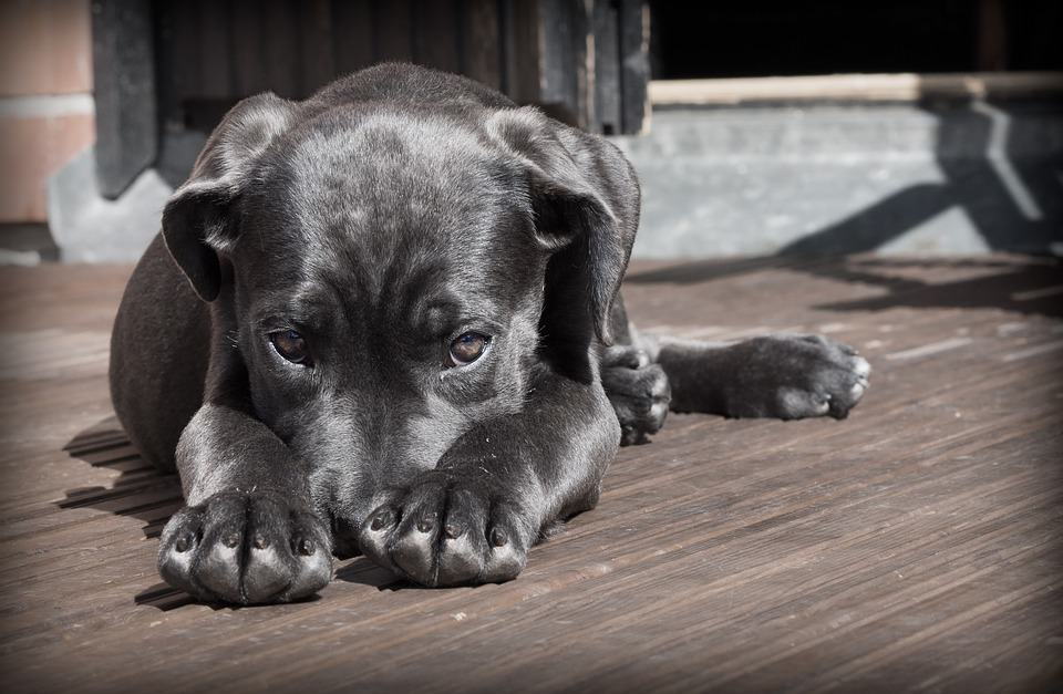 What happens to your pet after you're gone? (Part II)